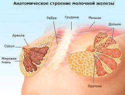 pered_mesyachnymi_nabuxaet_grud_1