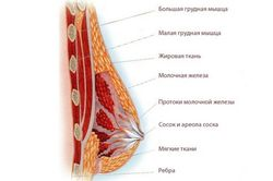 pered_mesyachnymi_nabuxaet_grud_3