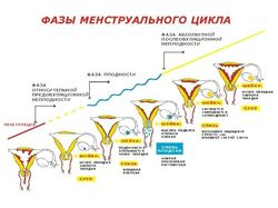 s_zhenshhinoj_vo_vremya_pms_1